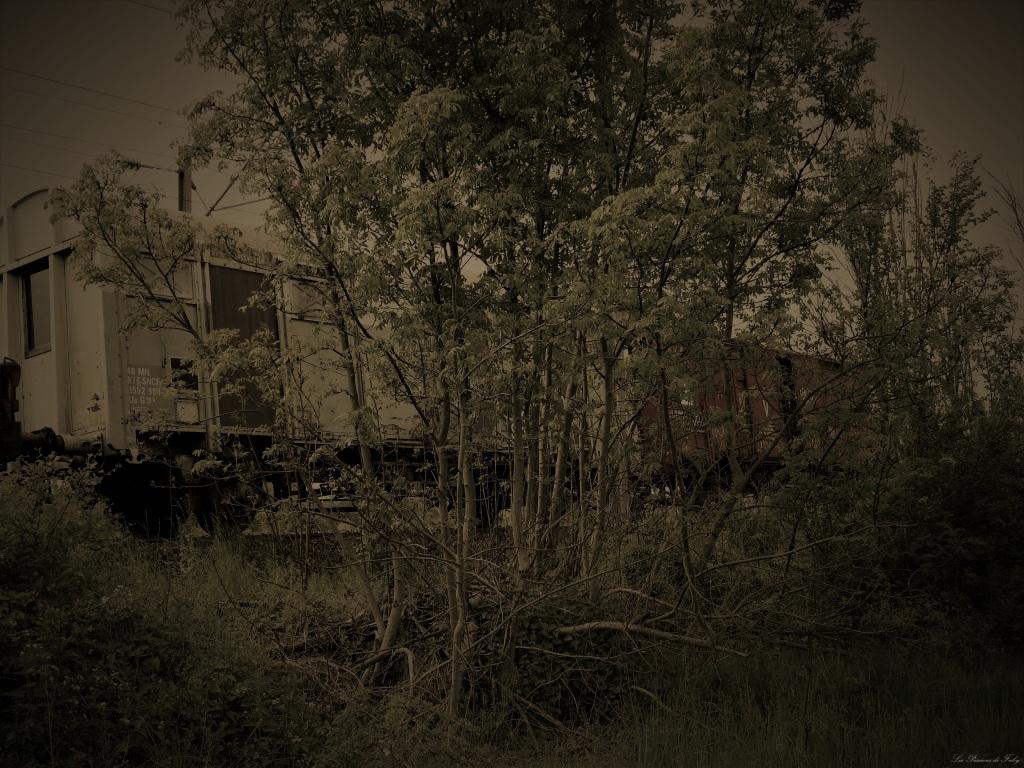 Abandoned World - Wagons les-passions-de-faby.com